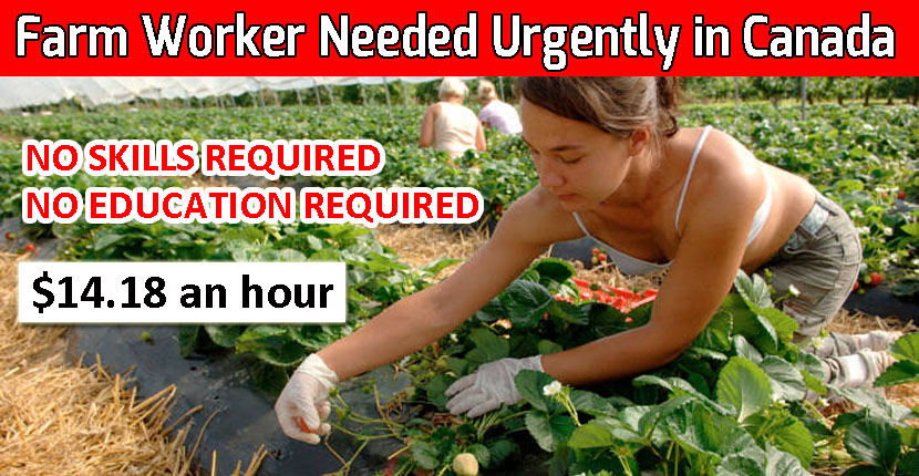 Farm Worker Needed Urgently in Canada - Full-Time Job